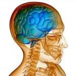 Zaostrené na mozog