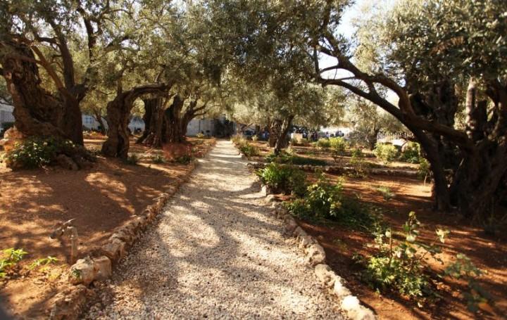 Getsemanská záhrada, miesto, kde bol podľa Nového zákona zatknutý Ježiš. V záhrade dominujú dva kostoly: Kostol Márie Magdalény a kostol Všetkých národov, ktoré sú vyhľadávané veriacimi z celého sveta