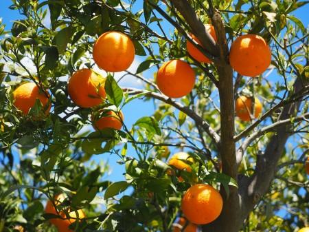 oranges-1117628_1280