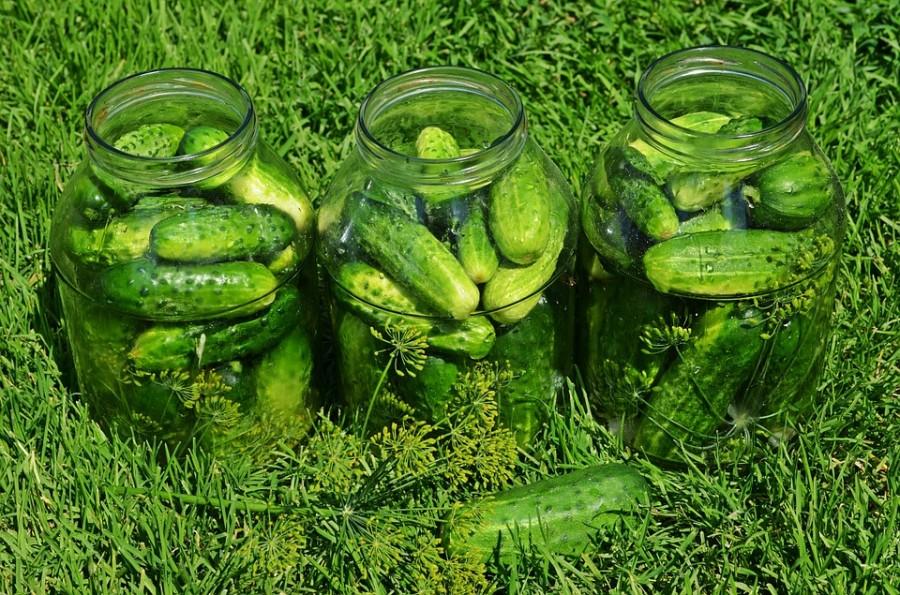 cucumbers-849268_960_720