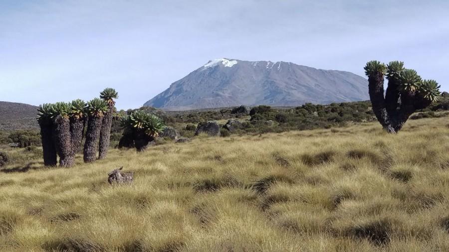 Kilimandžáro, foto: M. Boltižiar