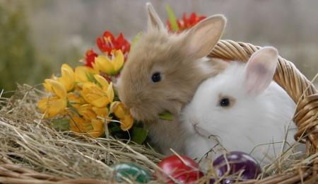 rabbit-555777_960_720